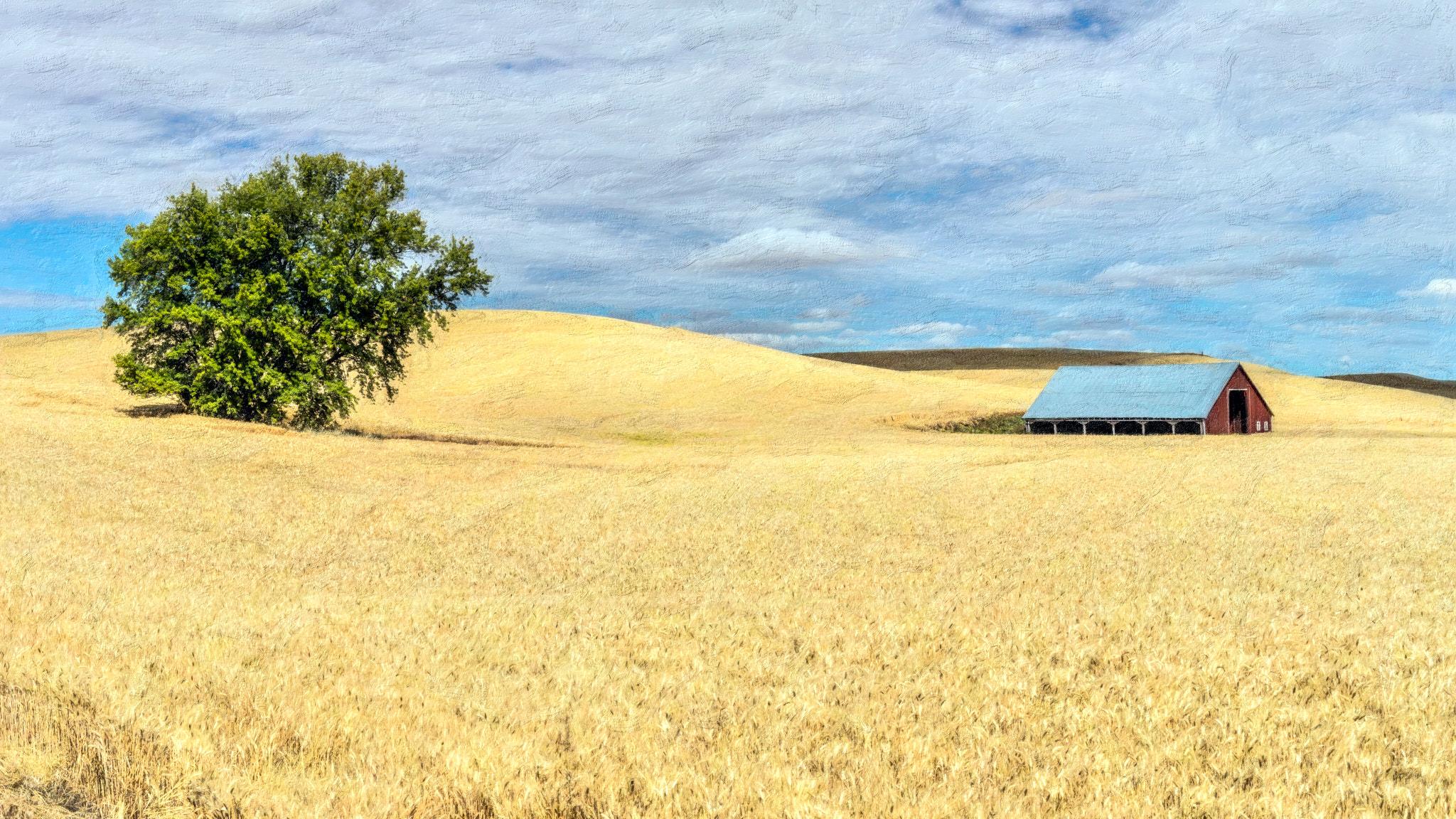 Peringer Road Wheat Field
